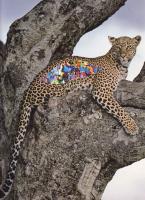 https://coupeletat.org:443/files/gimgs/th-5_5_leopard.png